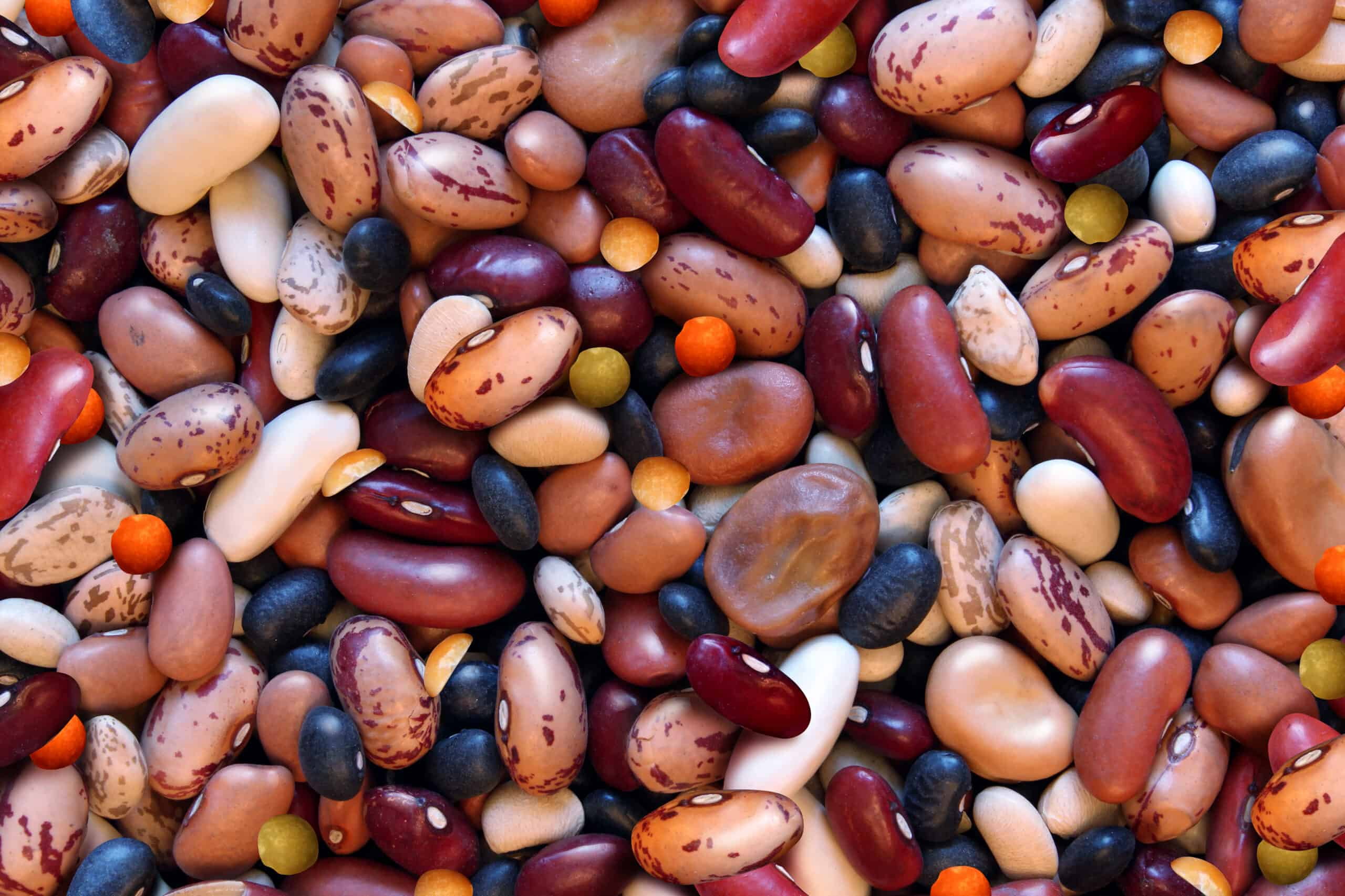 How To Prep And Cook Dry Beans Harvest To Table