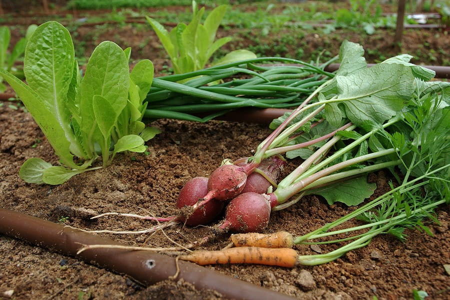 Vegetables in the right season