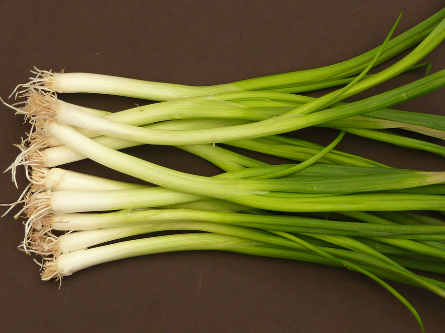 Spring Onions Green Onions And Scallions Harvest To Table,Fried Green Tomatoes Book