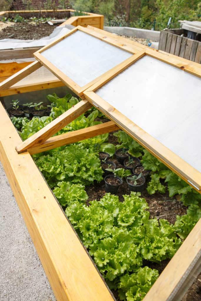 Small cold frame
