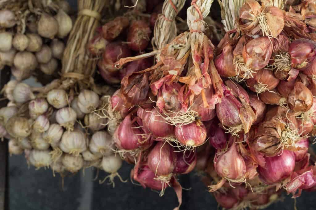 shallots stored in dry place