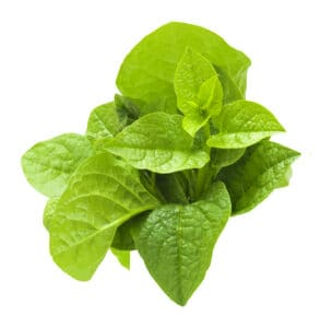 New Zealand spinach leaves