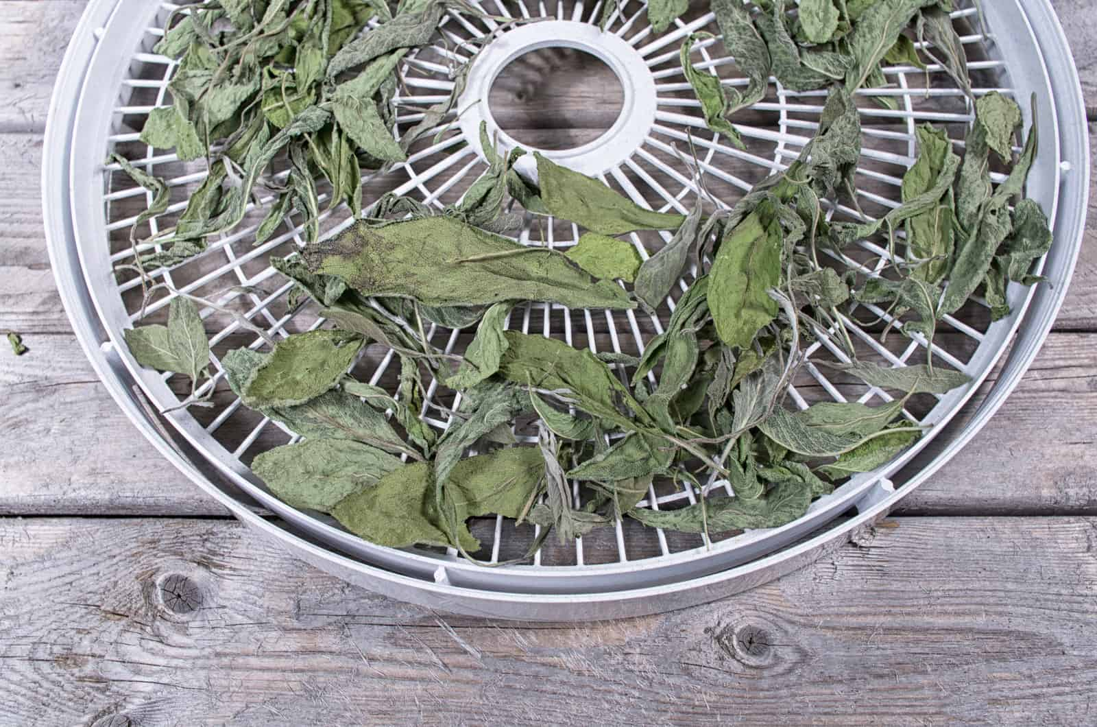 How to grow sage: drying sage for storing