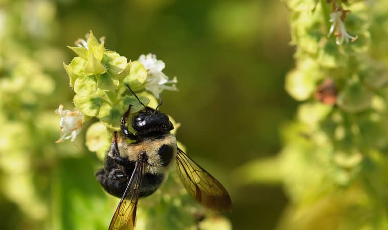 Bees and herbs