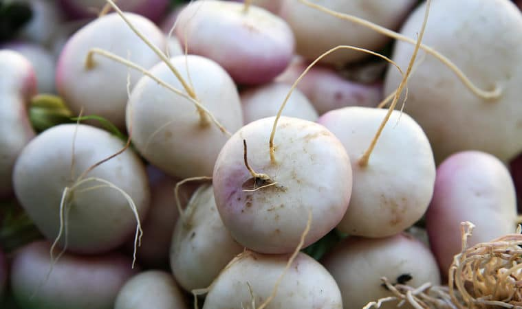 turnips growing problems