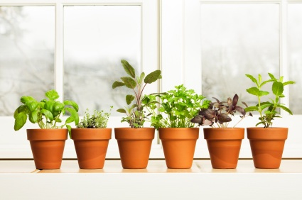 Window Sill Gardening