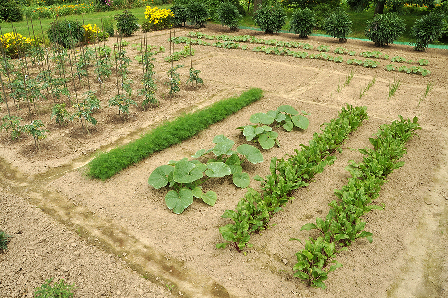 Vegetable Crop Yields, Plants per Person, and Crop Spacing