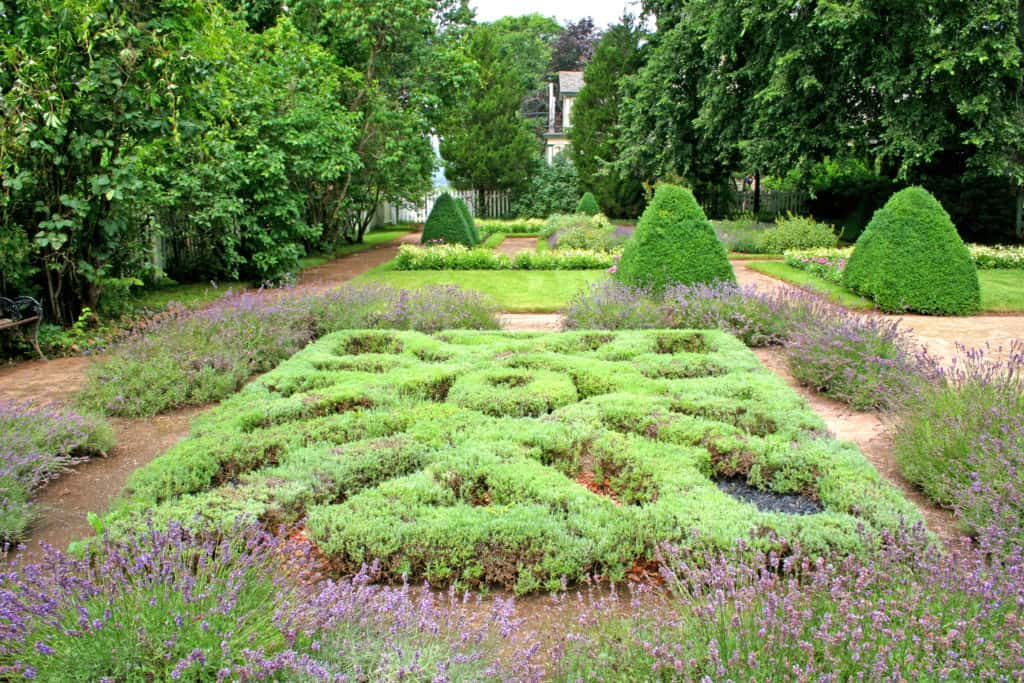 Traditional herb knot garden