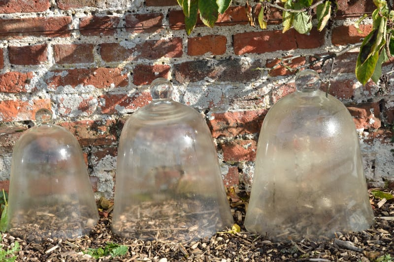 glass cloches in garden