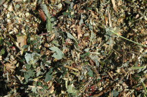 Chop plant debris to turn under or compost
