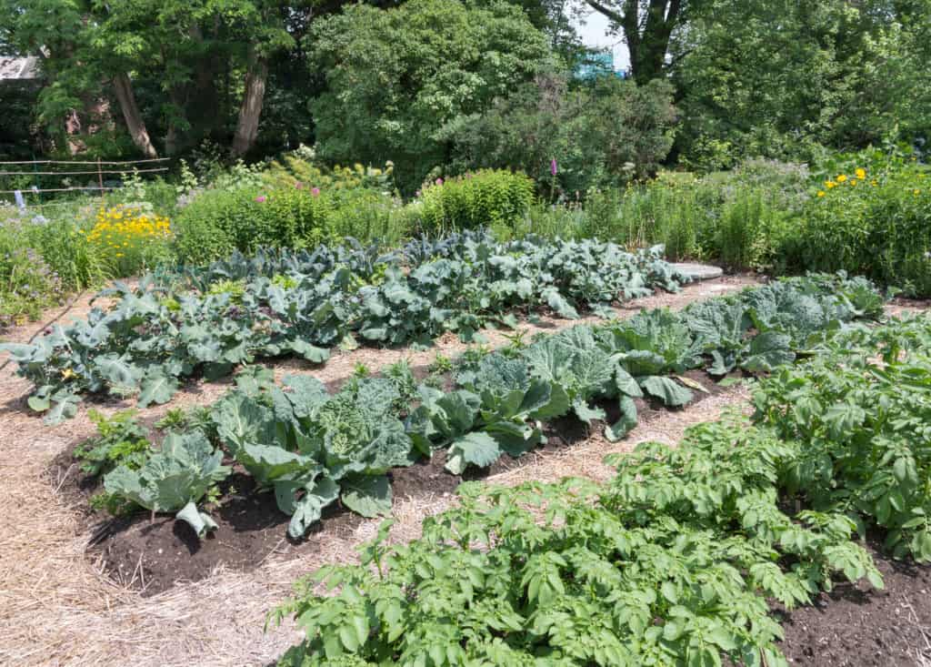 Fall vegetable garden