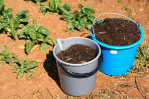 Compost sidedressing