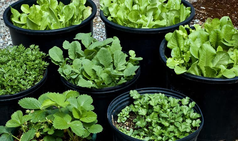 vegetables in containers