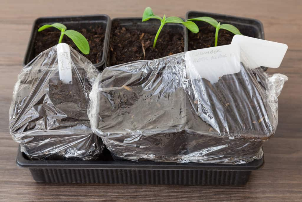 seed starting tray and bag