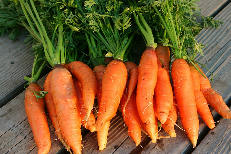 Carrots to store