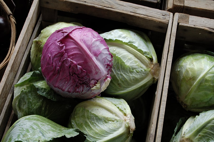 Cabbage stored in box