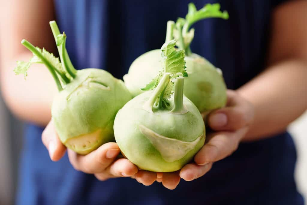 How To Harvest And Store Kohlrabi