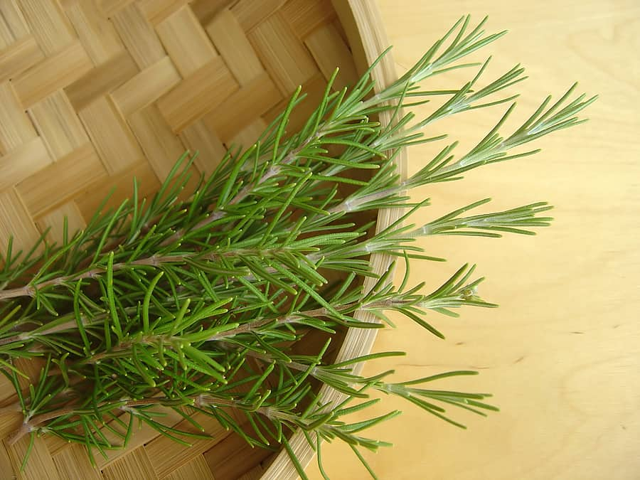 How to grow rosemary: rosemary in basket