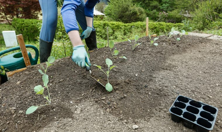Plan a Vegetable Garden