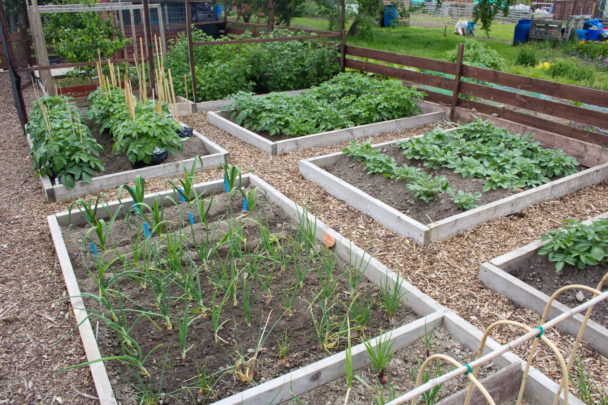 Crop Rotation In The Small Vegetable Garden