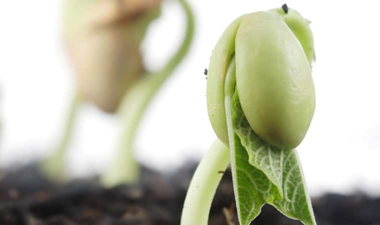 Vegetable Seed Germination Temperatures