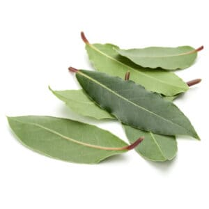How to grow sweet bay: bay leaves