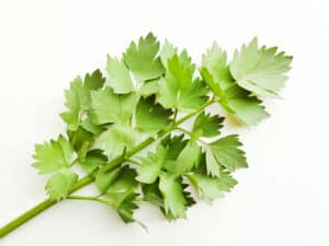 How to grow lovage: lovage leaves in kitchen