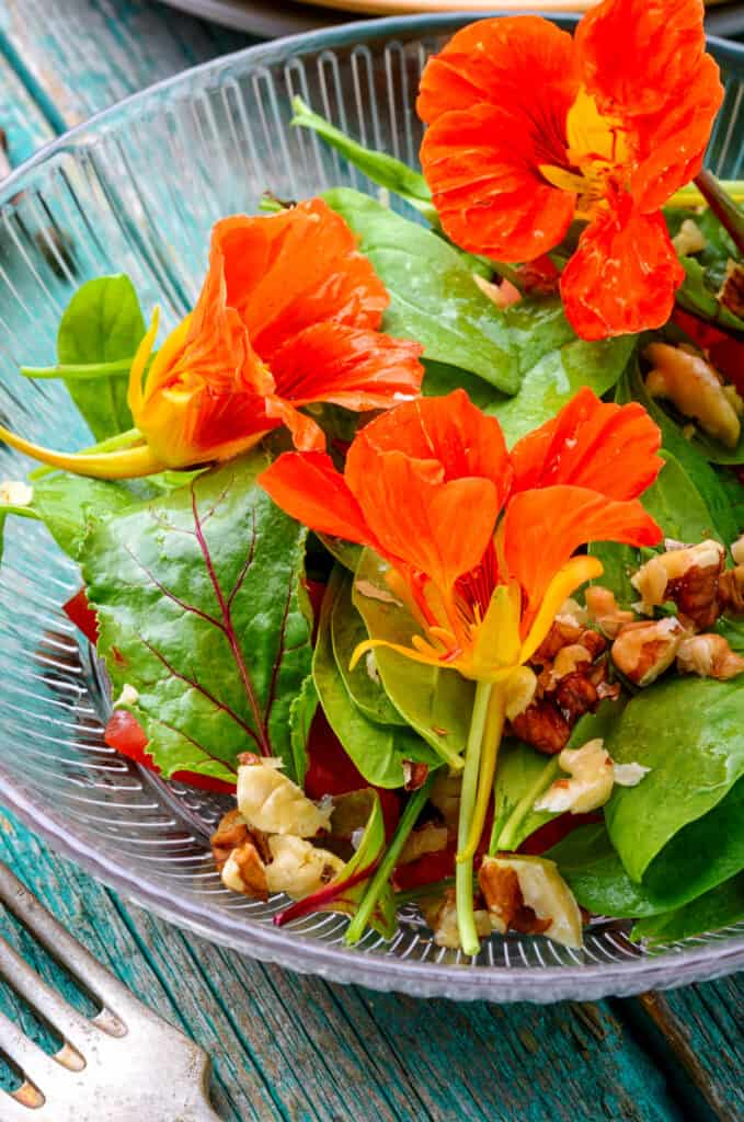How to grow nasturtium: salad