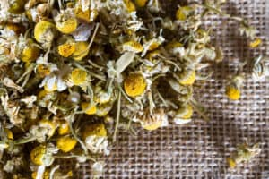 How to grow chamomile dry flowers